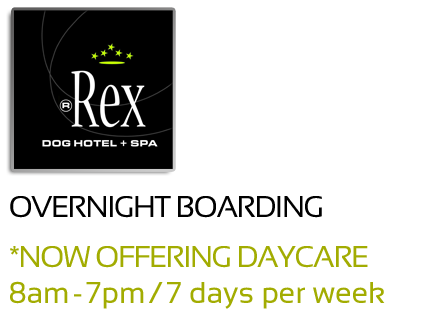Rex Dog Hotel and Spa. Overnight Stay
